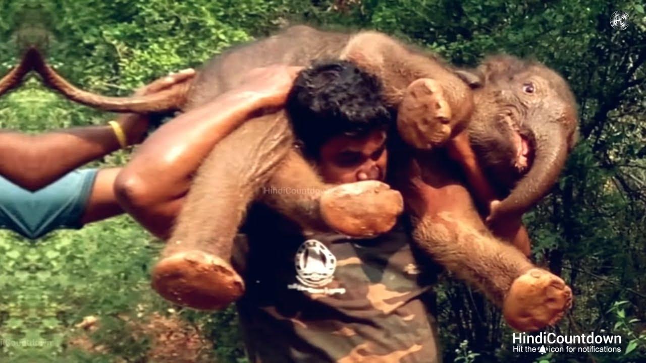 देखिए क्या होता है जब इंसानियत जीतती है | Animal Rescues that will Restore your Faith in Humanity