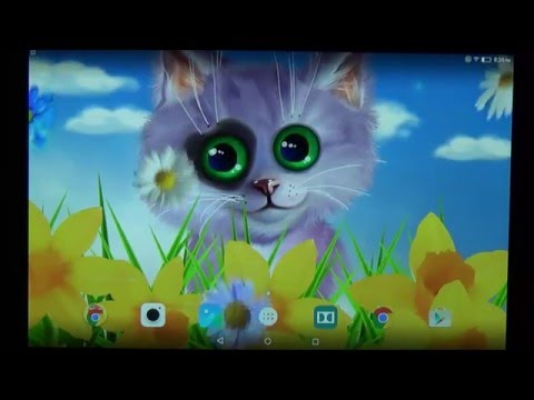Spring cat live wallpaper for Android phones and tablets