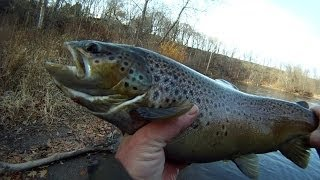 BIG STEELHEAD and BROWN TROUT from Lake Ontario Tributaries float Fishing with Eggs and Trout Beads