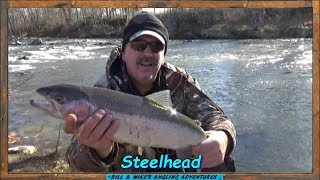 Steelhead fishing with Western New York Angler -  went 1 for 8