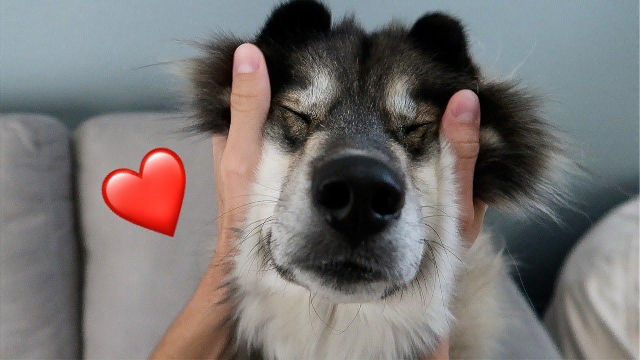My Huskies Favorite Ways To Be Loved!