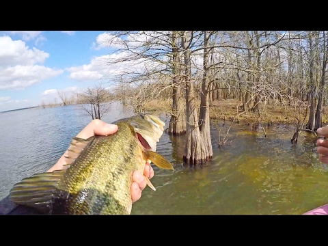 Backwoods Bass Fishing