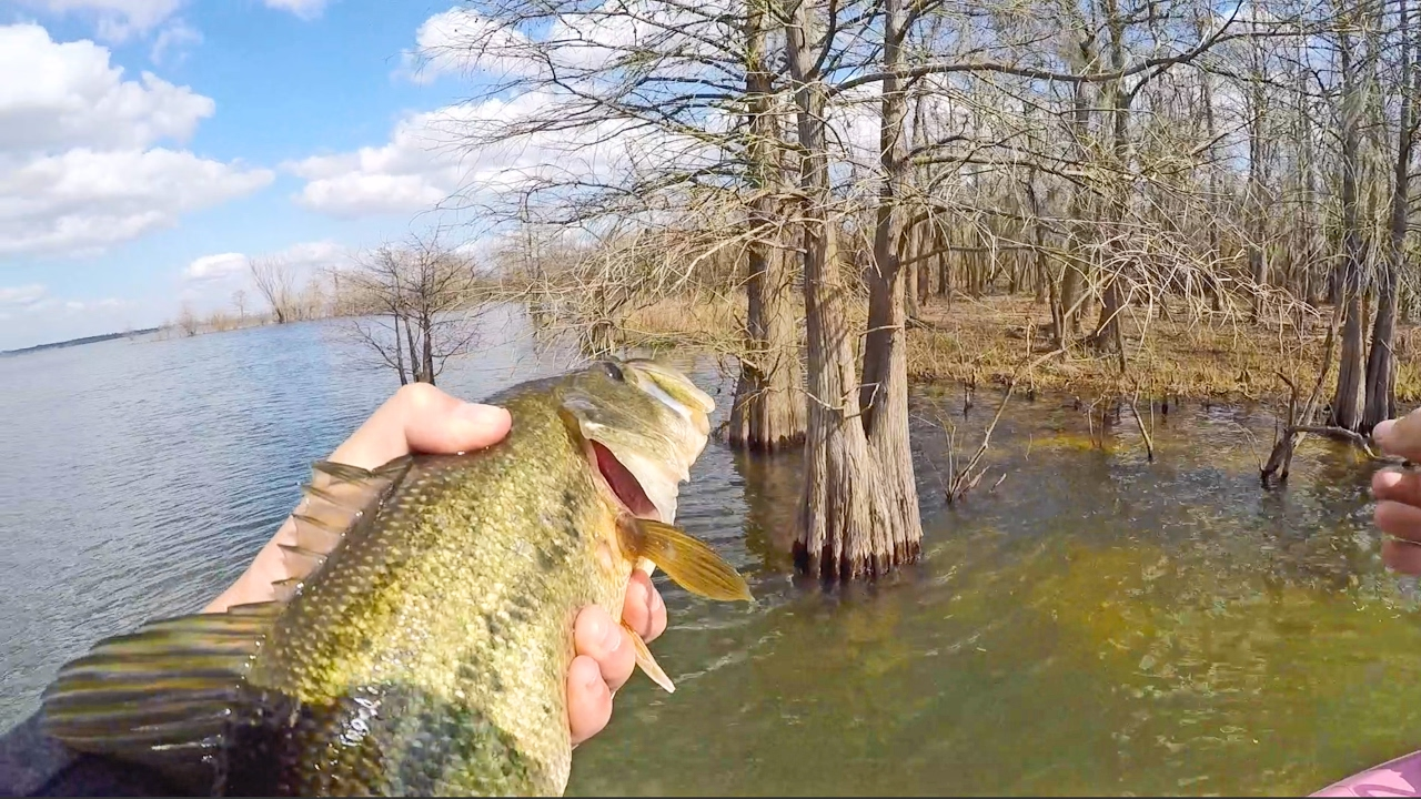 Backwoods Bass Fishing
