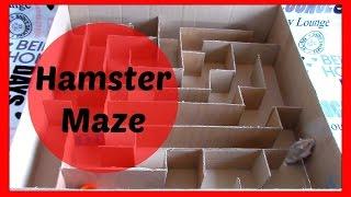 Hamster Maze (Ariel)