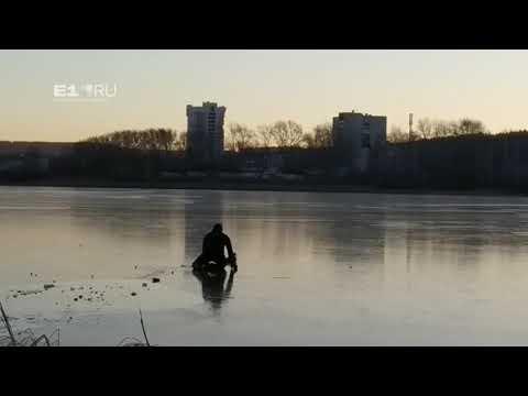 Екатеринбуржцы спасают утку,  которая 9 ноября вмерзла в лед Исети