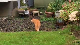 近所の団地の猫が喧嘩してました.