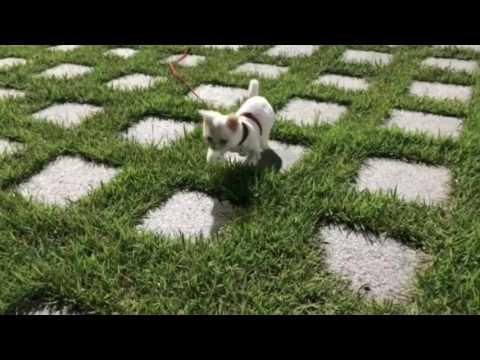 🐾  고양이(주르 )산책 훈련 1