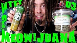 WTFT EP03 (Meowijuana)