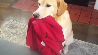 GUILTY DOGS   Funny Dog Compilation 😂🐶