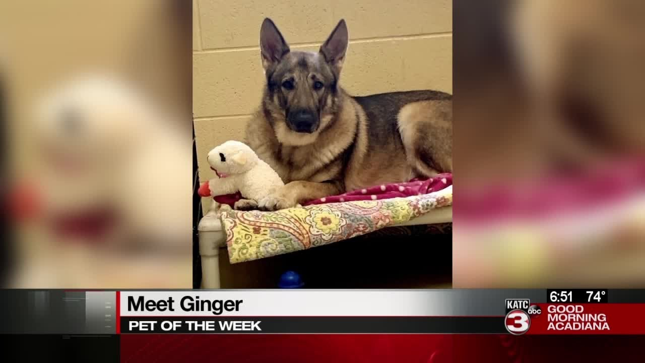 Pet of the Week: Ginger