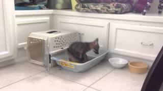 Potty Trained Baby Grey Fox
