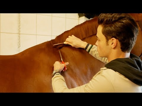 GIVING MY HUGE (178cm) HORSE A MAKEOVER|| STEP 1