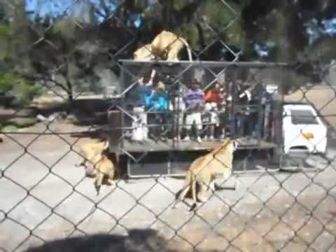Walton And Johnson - Video - the Zoo Where Tourists Are Caged
