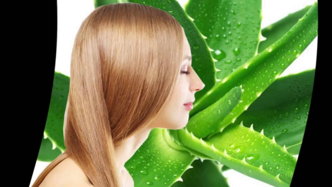 Сок алоэ для волос: рецепты, применение и польза