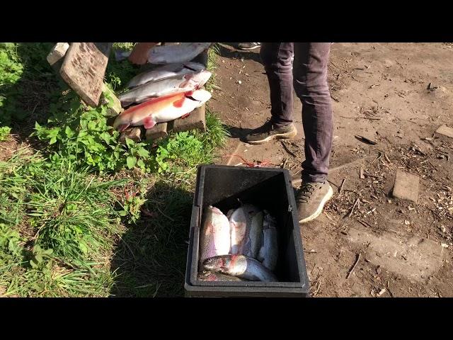 Ihmsen - Der Forellengott Forellensee Rosenweiher mit bestem Fisch für Schleswig-Holstein!