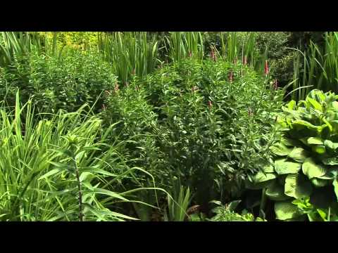 Great Gardening - Bees and Pollinators