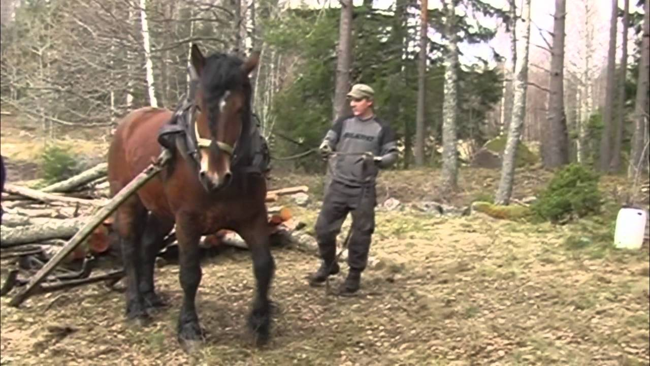 hitta tjejer på nätet knulla med häst
