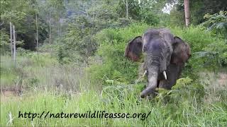 conversation with elephant