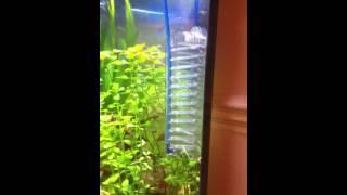 aquarium co2 ladder diy planted corner fish tank