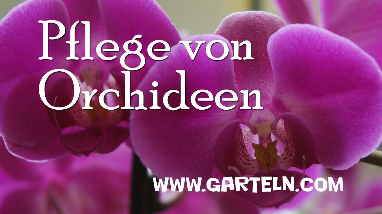pflege von orchideen youtube. Black Bedroom Furniture Sets. Home Design Ideas