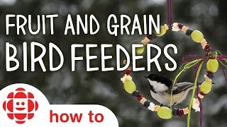DIY Fruit And Grain Bird Feeders | Monkey Makes | Crafts For Kids