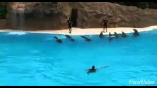 Шоу дельфинов ( в дельфинарии )