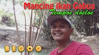 BEGOG ; Mancing ikan Gabus Old Styles | Fishing snakehead with live bait