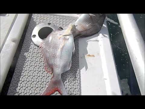 Sydney Reef Fishing