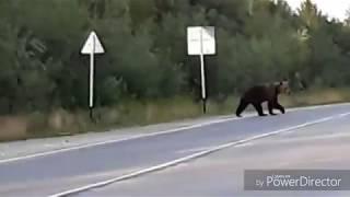 Очередной медведь в Усинске