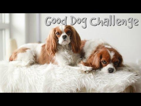 GOOD DOG CHALLENGE | Pass or Fail?!