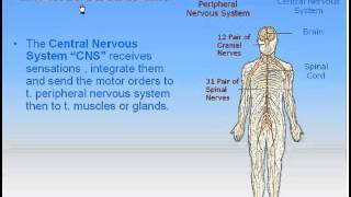 17-Nervous System_1-Divisions of Nervous System (Anatomy Intro Dr Ahmed Kamal)