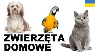Польська для початківців - Домашні тварини 1 (Zwierzęta domowe)