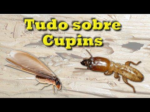 Cupins - como eliminar e prevenir