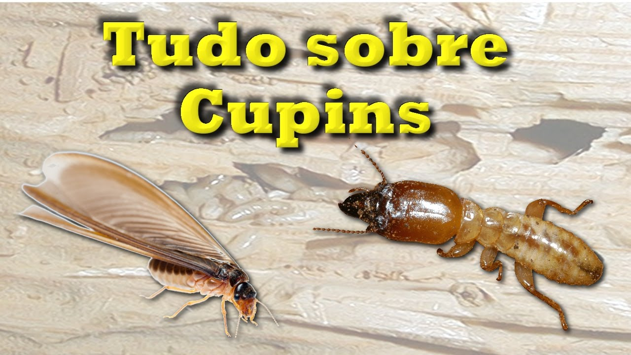 Dedetização de Cupim em Santo André