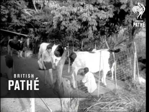 Congo Republic (1960)