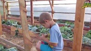 Семья Бровченко. Сбор картошки и уборка урожая (часть 4) (09-10.15г.)