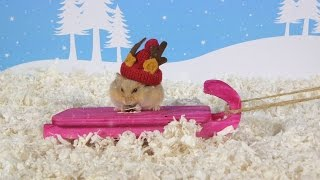 Day 7: Tobogganing - Cute Hamsters: 12 Days of Christmas
