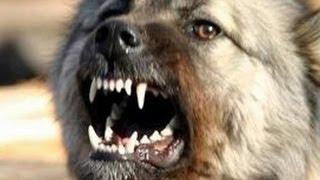 Ультразвуковой отпугиватель Clever Dog Cd 100