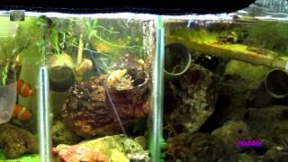 環保海水缸