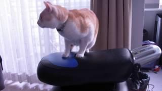 意外と快適?ロデオボーイの上で揺れながらくつろぐ猫さん