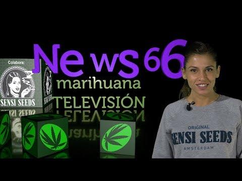Cultivo  en COCO de la MARIHUANA, Sorteo WEED BOX, Nueva variedad SATIVA de Sensi Seeds. NEWS 66
