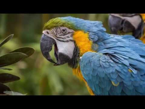 Seneca Park Zoo Memories