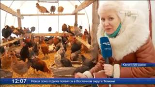 Птичье царство зимой(Птичница из Юргинского района Тамара Моринец к зиме подготовилась основательно. Для её живности построено..., 2017-01-09T08:50:22.000Z)