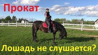 Претензии к прокатной лошади или: \