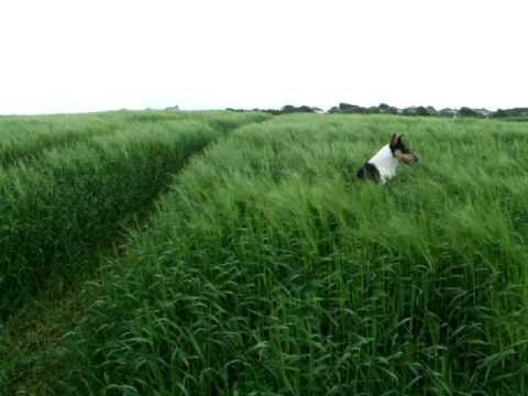 DOGS HAVING FUN GRASS JUMPING