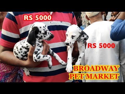 Broadway Pet Market பிராட்வே வாரச்சந்தை சென்னை