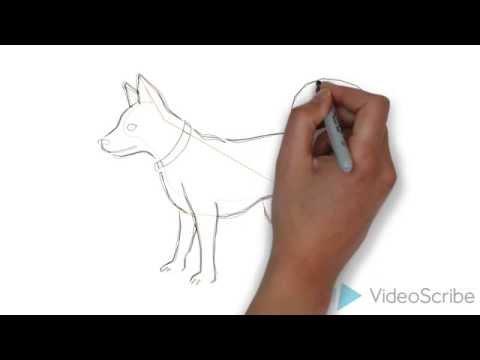 Как нарисовать: ТОЙ ТЕРЬЕРА)