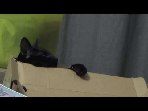 Cat watching Tom and Jerry | Smart cat watching Cartoon