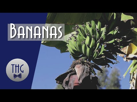 How Bananas Changed the World