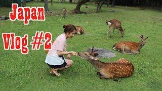 Japan vlog #2: Chùa Thanh Thuỷ - Đi Nara cho hươu ăn nè